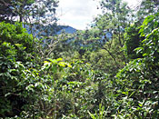 coffee farm resembling jungle