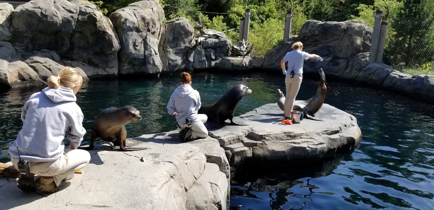 Sea Lion Demonstration