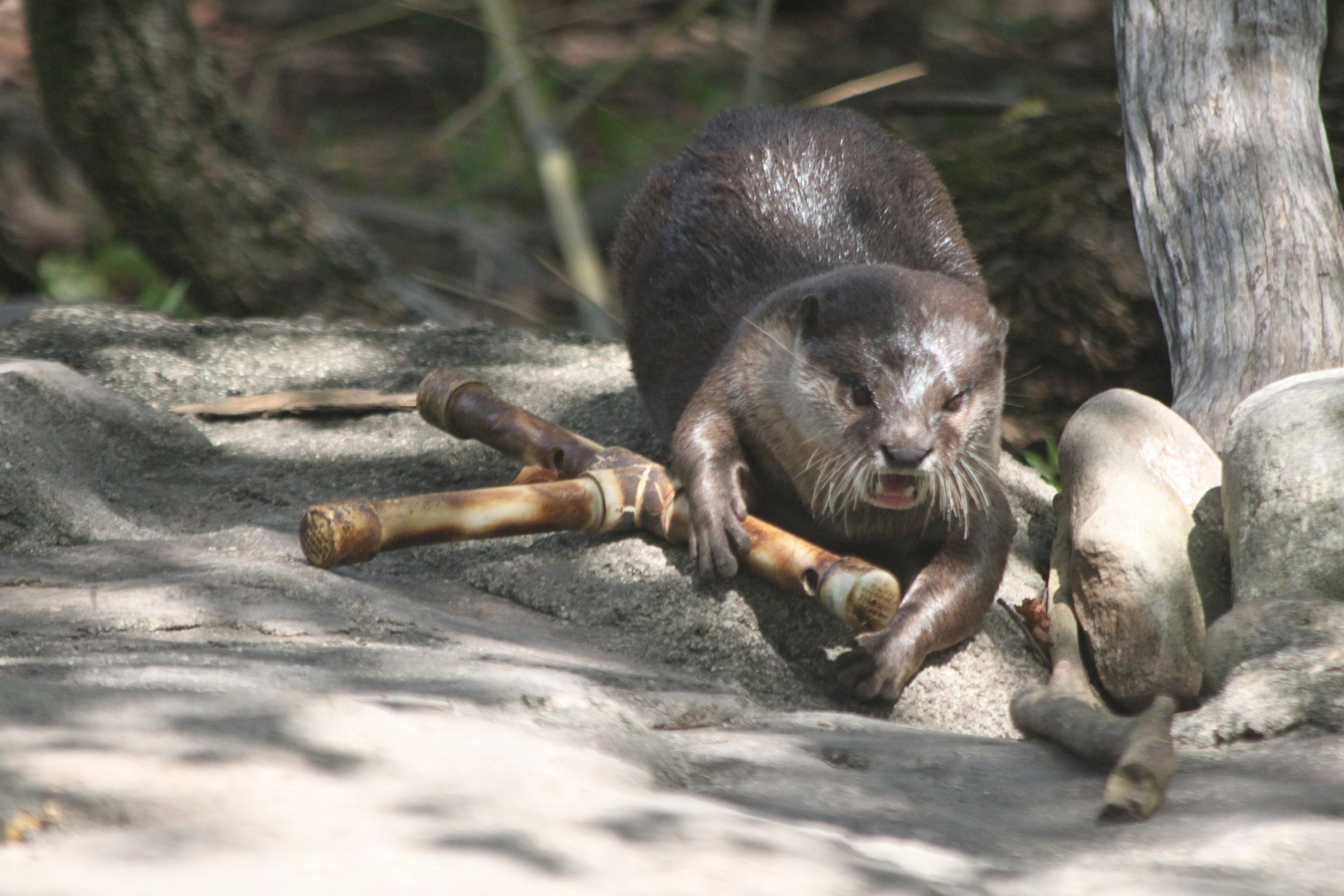 Enrichment (otters)