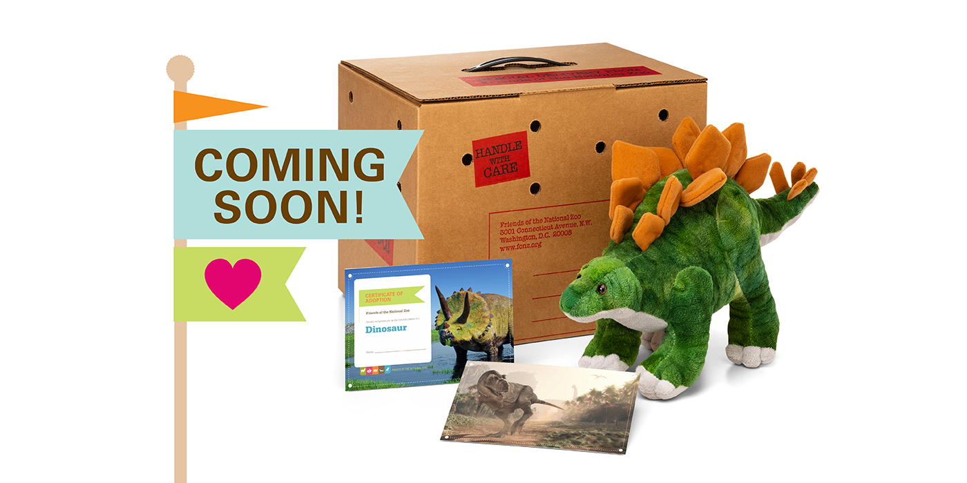 "A dinosaur plush with postcards and a cardboard carry tote with the words ""coming soon"""