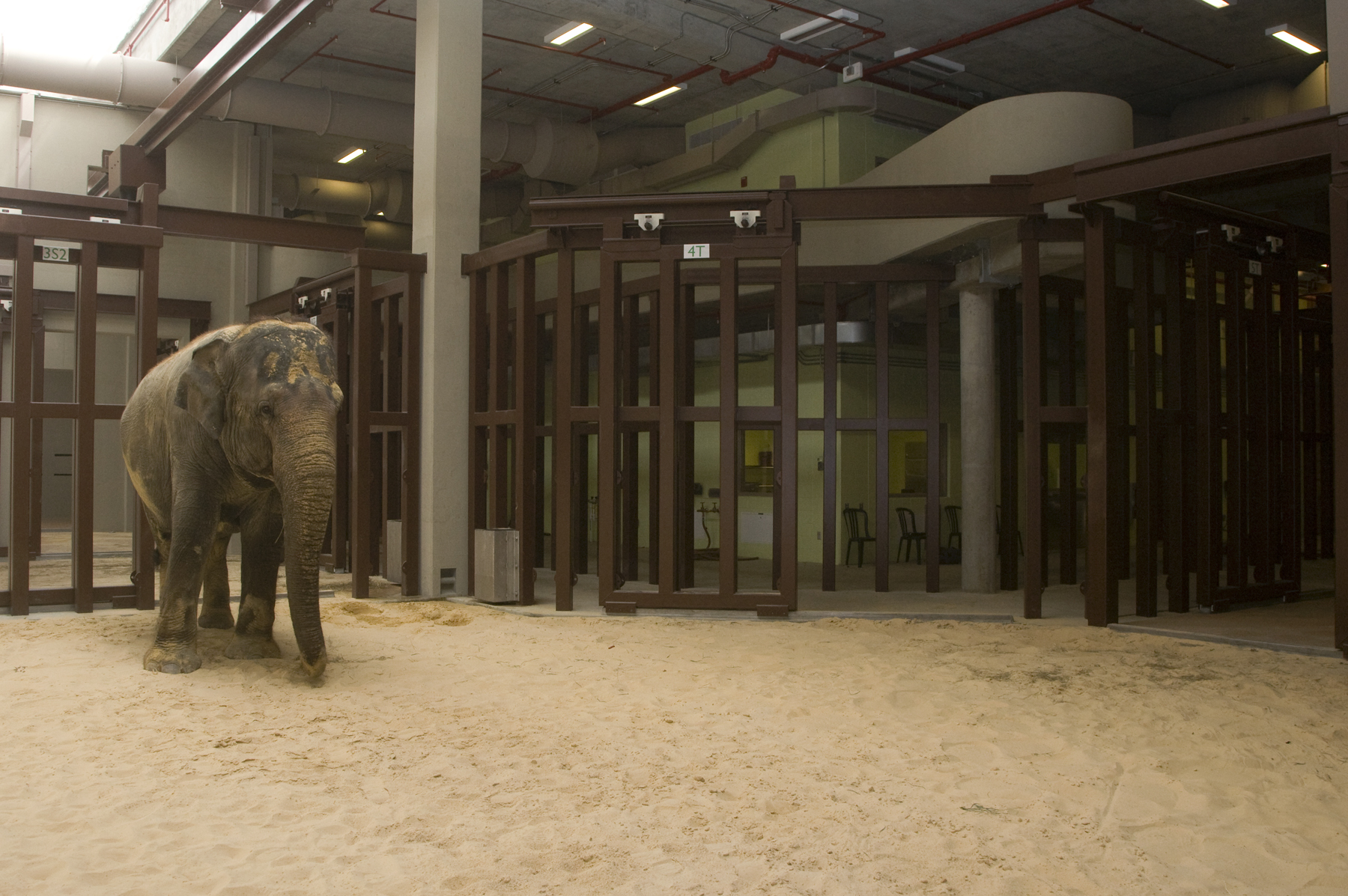 The Skylights Open And Close Automatically To Help Regulate Barn Temperature Allow For Ample Natural Light Even When Elephants Prefer Stay