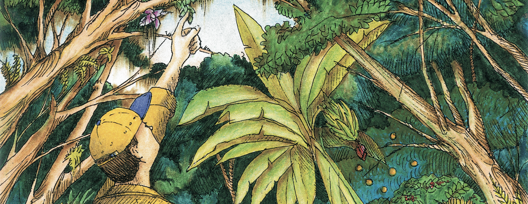Illustration of an observer pointing at a rich canopy over coffee bushes