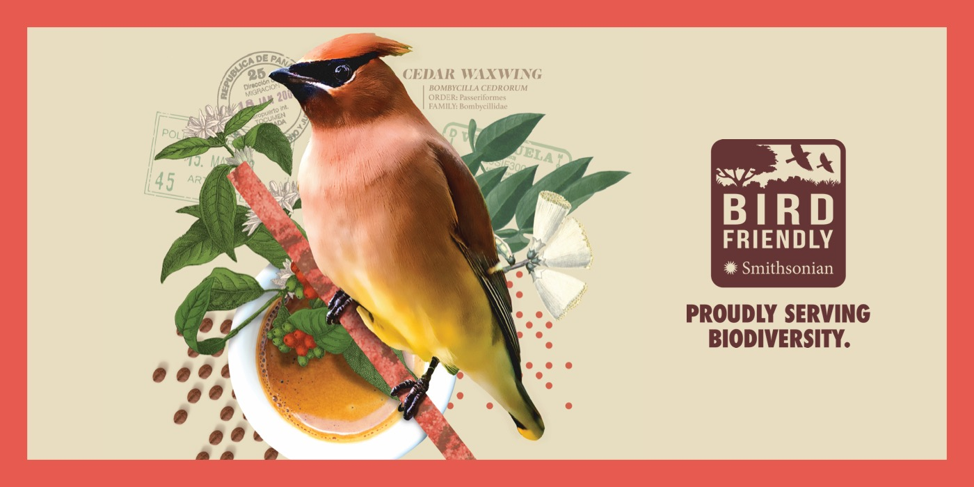 """An illustration of a red and yellow bird perched on a branch overlaid with a cup of coffee. The image is surrounded by a red border, and the right side features the Bird Friendly Coffee logo with the text """"Proudly Serving Biodiversity"""""""