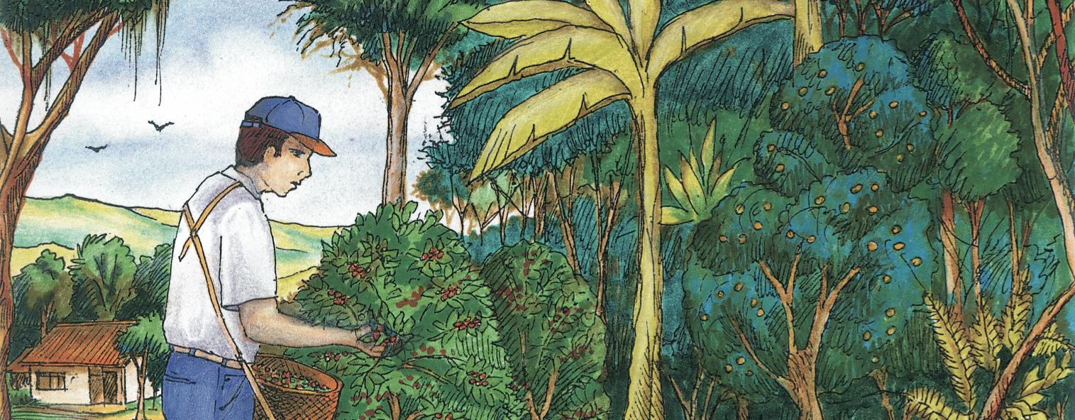 An illustration of a farmer harvesting shade-grown coffee