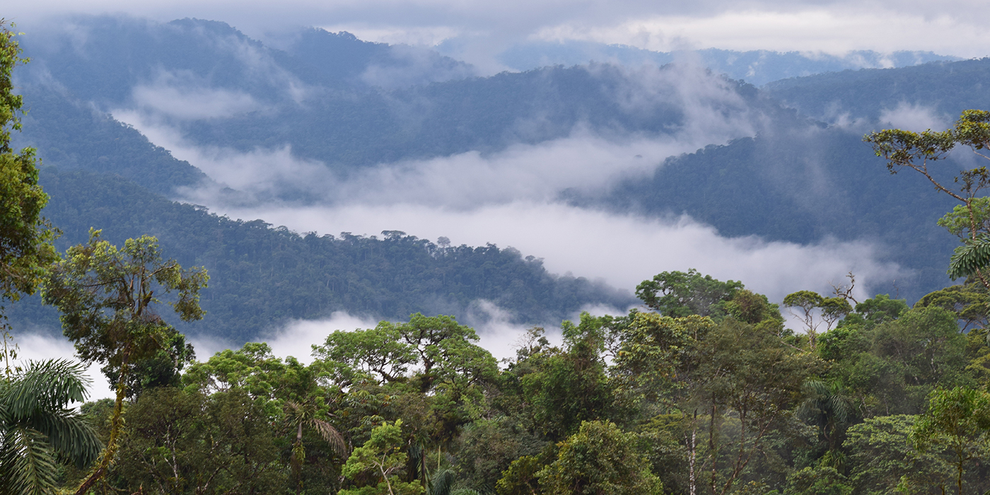 canopy of the rainforest with clouds above