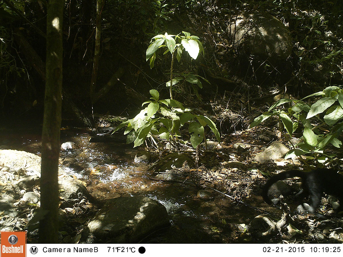 jungle scene with black tail visible in lower right of picture