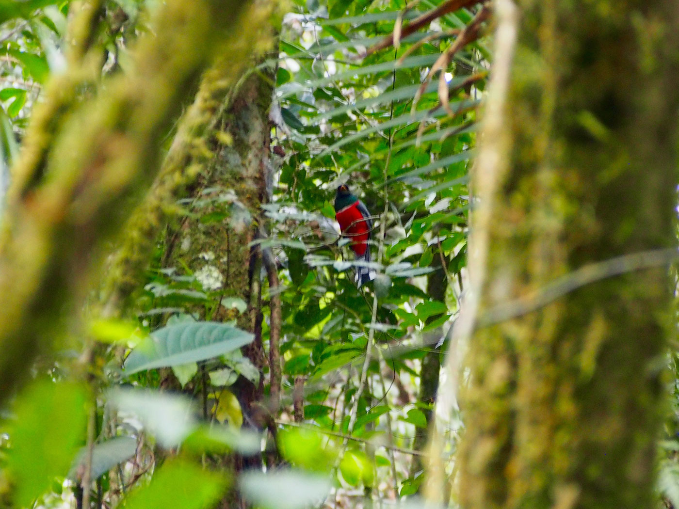 striking bird in a dense jungle