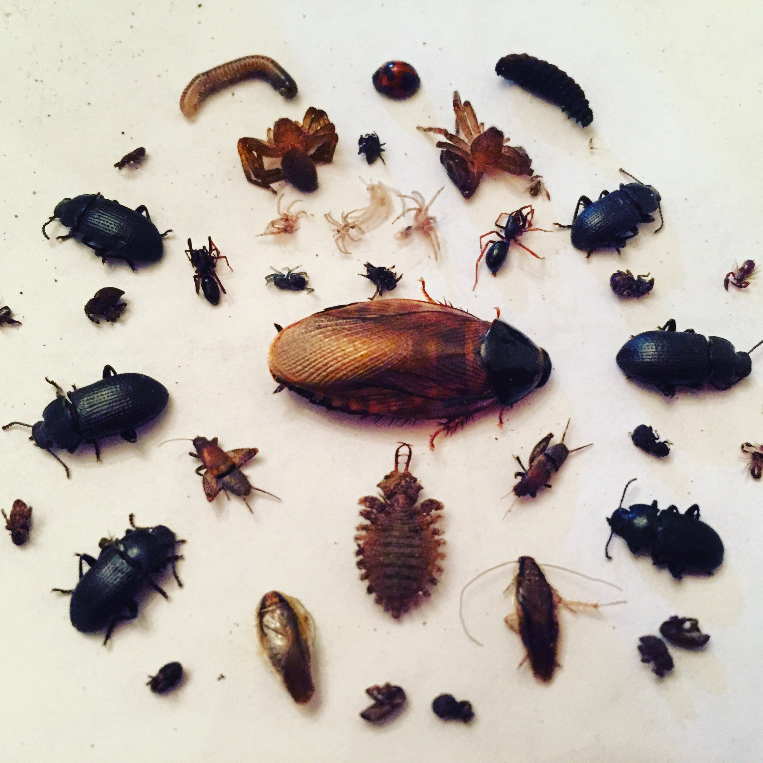 A number of different insects arranged in a circular pattern