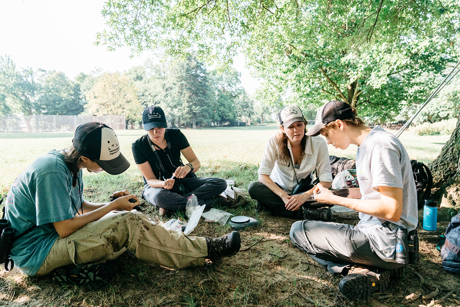 A group of four scientists sitting on the ground examining gray catbirds