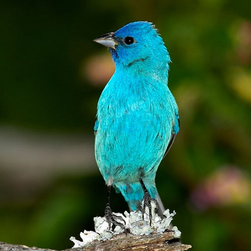 brightly-colored bird