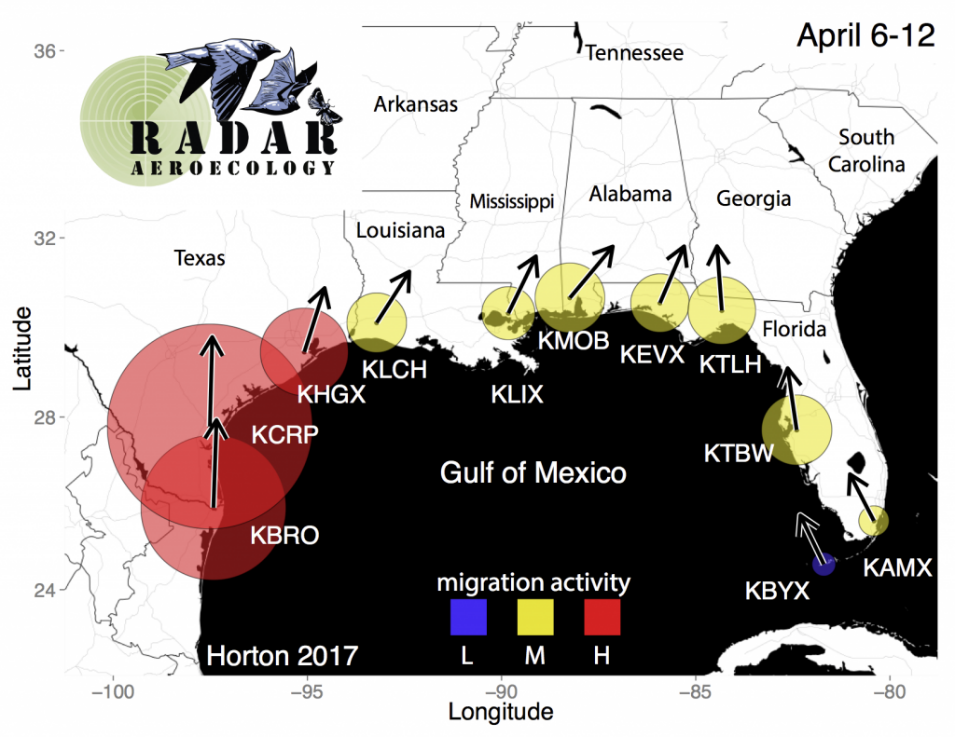 BirdCast map of intensity and direction of bird movement through airspace around the Gulf of Mexico