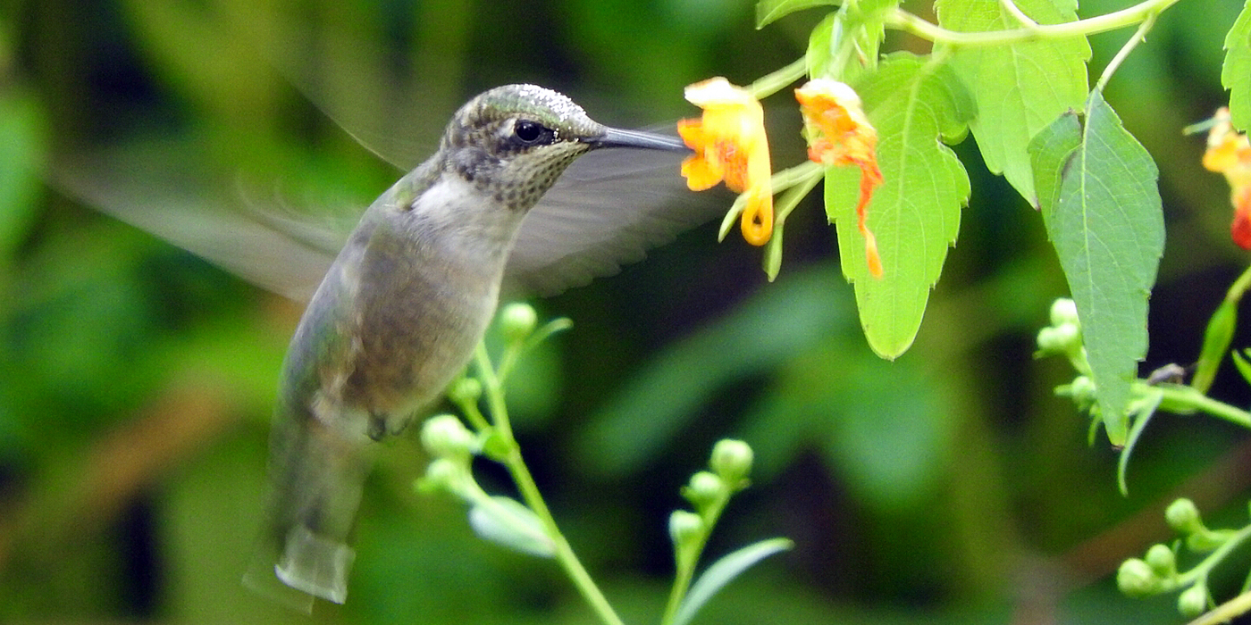 bird pollinating flower