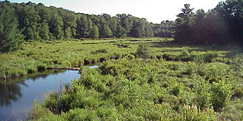 Landscape picture of stream meandering through a wetland, woods in background