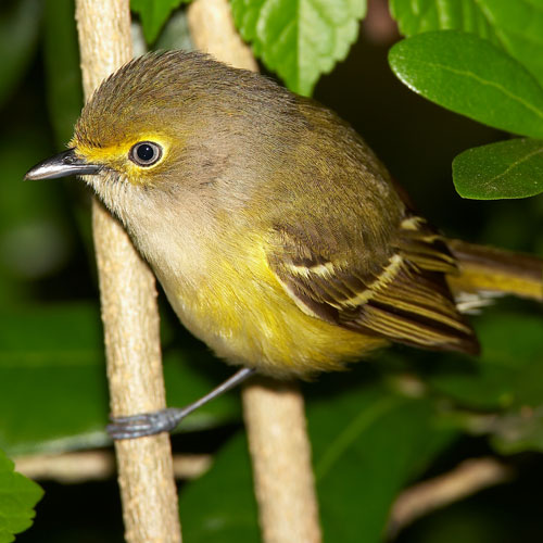 small bird in a thicket