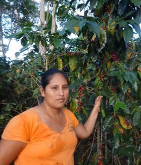 Noemi showing her coffee in production in the Bird Friendly certified coffee