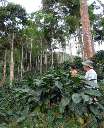 Concepción's coffee plot being inspected during APROSELVA's 
