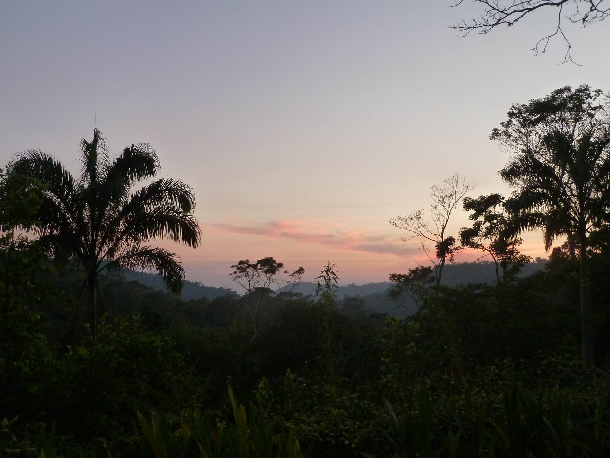 colorful sky over a jungle canopy