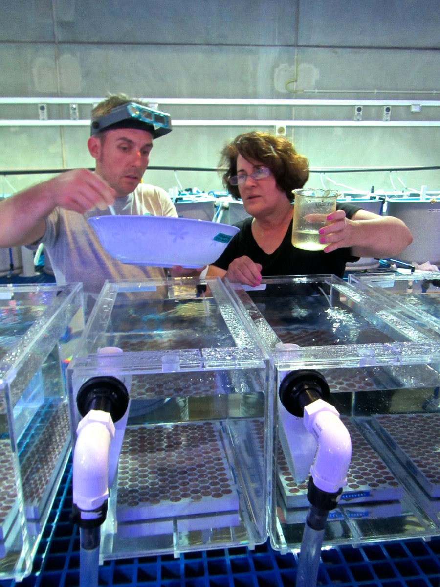 Mary and Mike work with coral tanks
