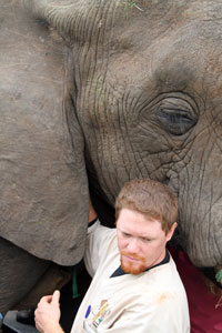 Gue reaches under elephant's ear to perform field surgery