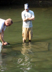 Folks from the Western Pennsylvania. Conservancy returning a hellbender. Photo courtesy of Lauren Augustine.