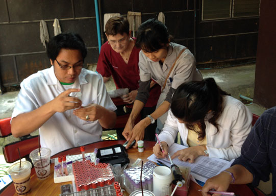 Conducting blood glucose and ketone analysis on site at Maesa Elephant Camp in Northern Thailand.