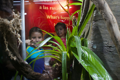 Little kids look at frog exhibit. Photos by Brian Gratwicke, Smithsonian Conservation Biology Institute.