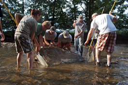 Lifting a rock for a hellbender. From left to right, Michelle Leasure, Pat Roberts, Brian Neal, Eric Chapman, Paul Hicks, and two volunteers. Photo courtesy of Brian Gratwicke.