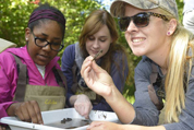 students examine insects in field