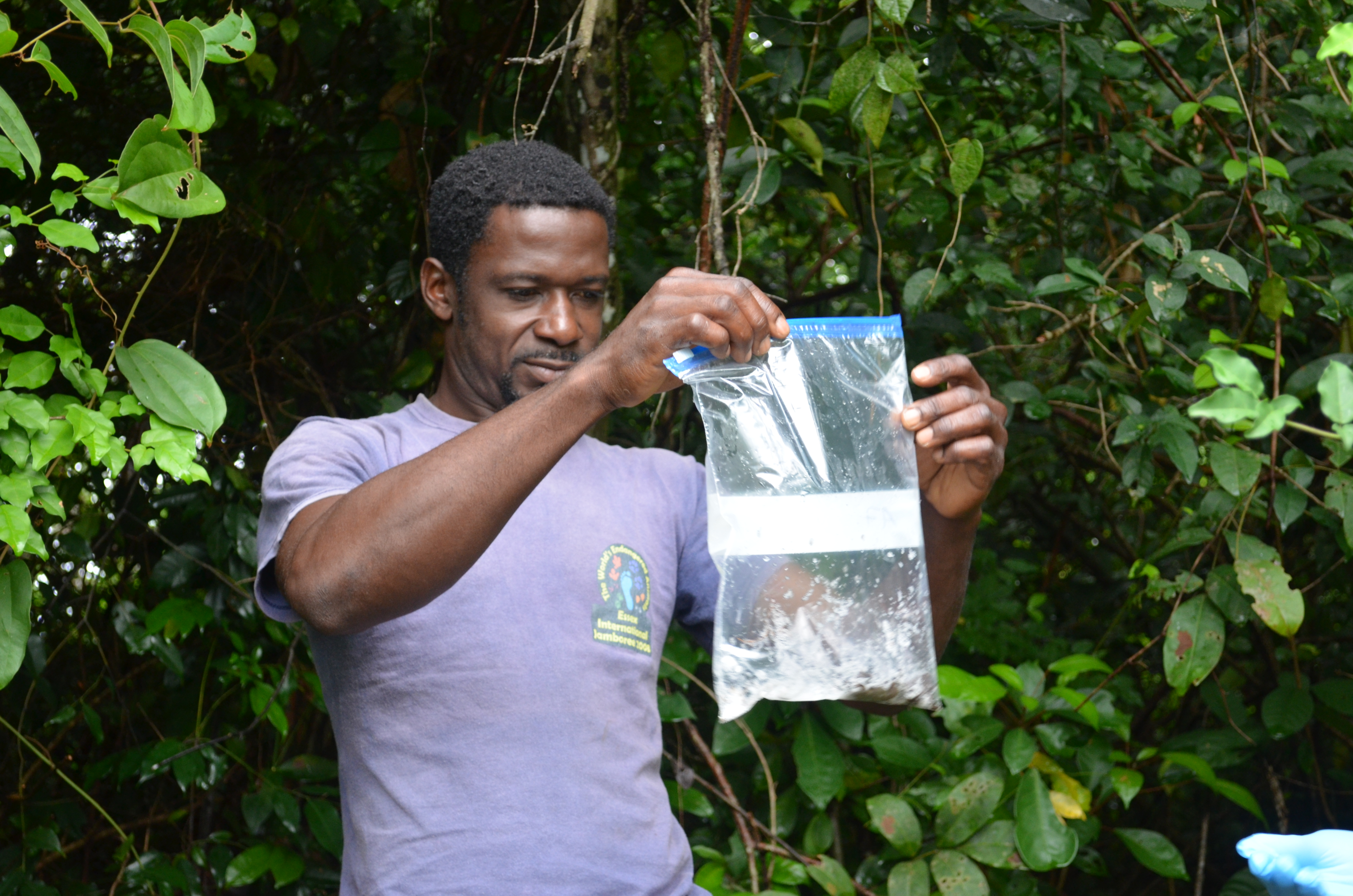Pierre Nicaise Guissiegou, road project field assistant, collecting frogs in Gabon.