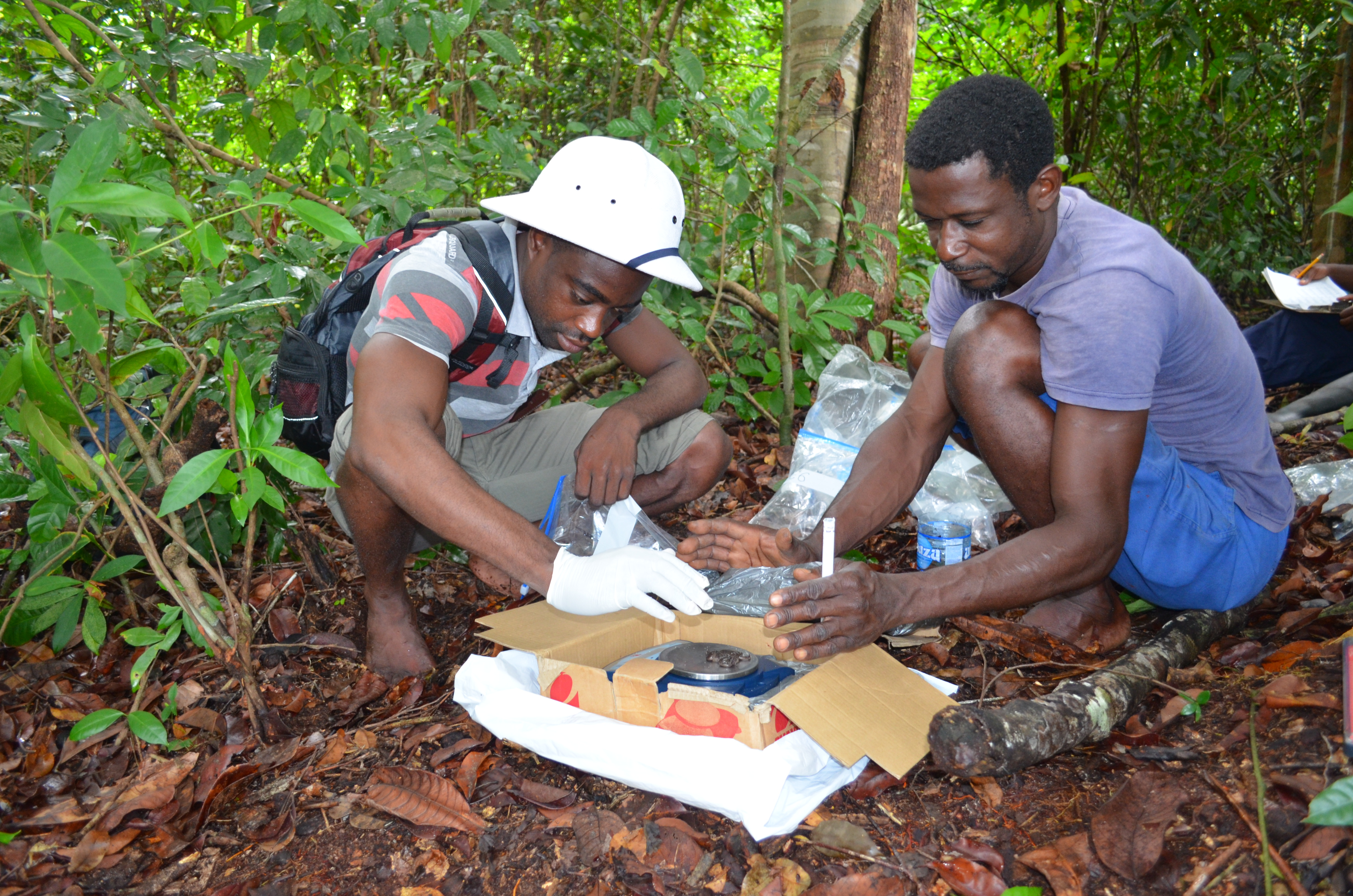 Axel Litona, then an SCBI Gabon Biodiversity program intern, and Pierre Nicaise Guissiegou, road project field assistant, collecting data on frogs in the field in Gabon.
