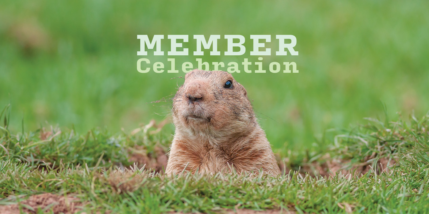 """A photo of a prairie dog poking its head out of a burrow in the grass and the text """"Member Celebration"""""""