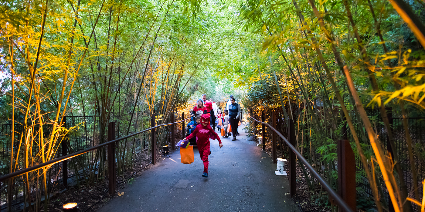 A child dressed in a red costume and face mask holds a trick-or-treat bag as he heads down a bamboo-lined path at the Smithsonian's National Zoo for Boo at the Zoo. He's followed by other children and adults dressed in costumes