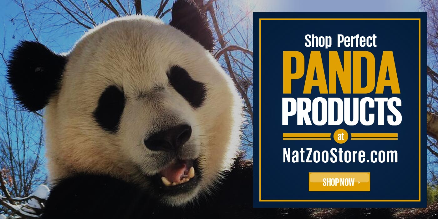 shop panda products online