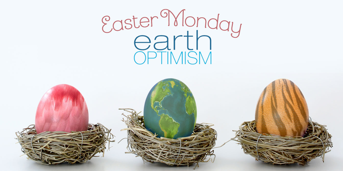 """Three eggs sit in individual dry-grass nests. One looks like feathers, the other like the earth and the third one looks like a tiger's stripes. The words """"Easter Monday and Earth Optimism"""" are at the top."""