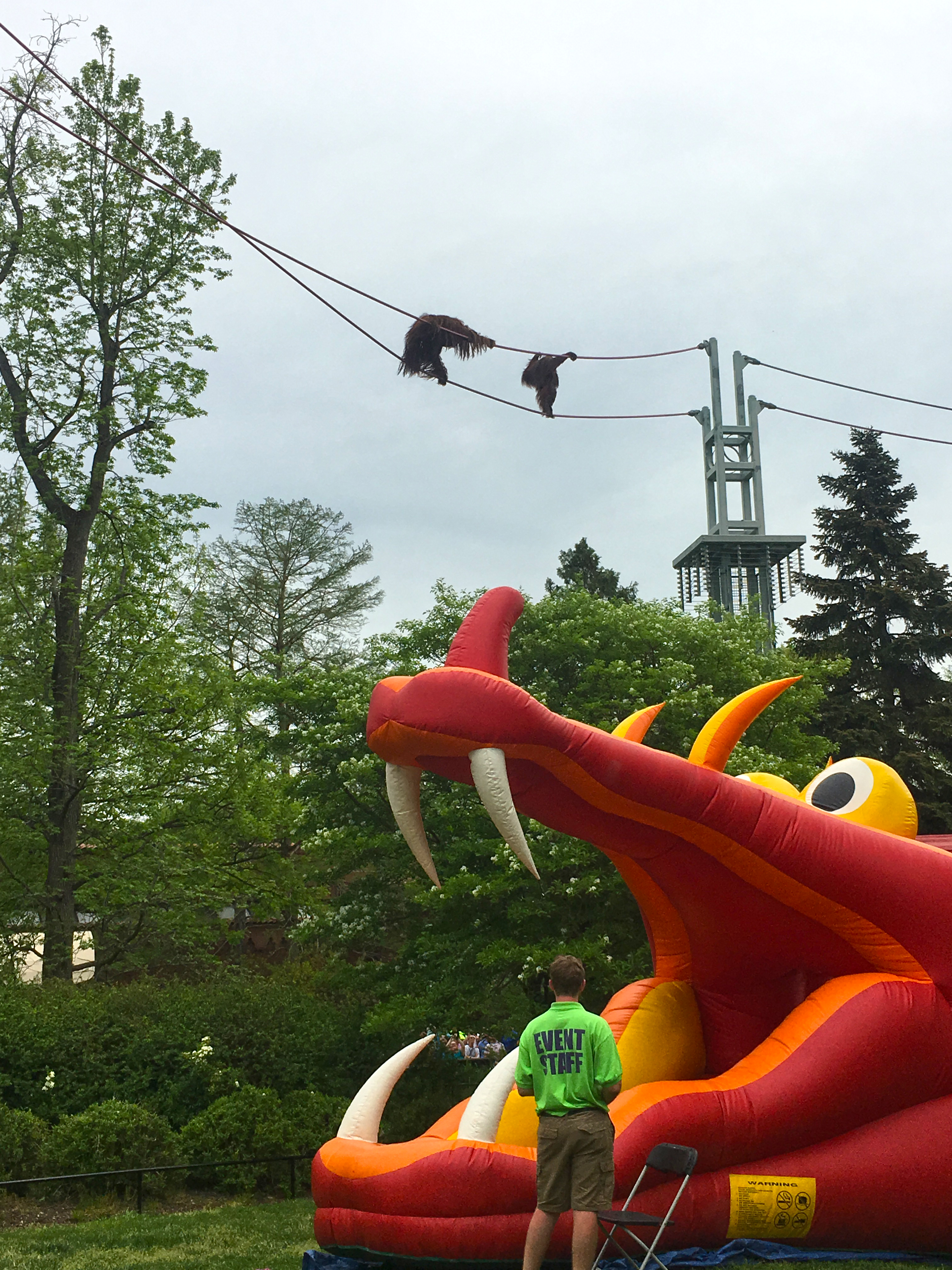 A dragon-shaped inflatable castle set up below the O-line where two orangutans cross the sky at the Smithsonian's National Zoo