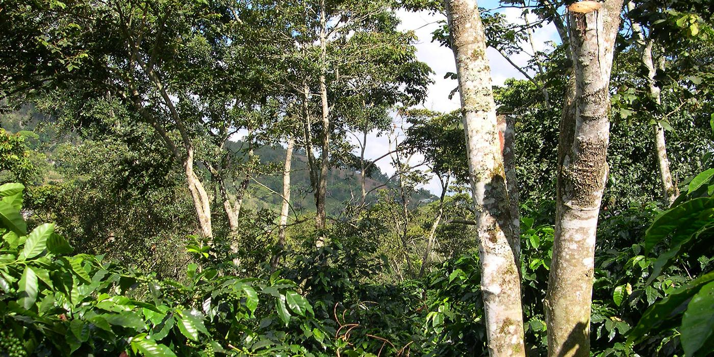 Bird Friendly coffee farm in South America