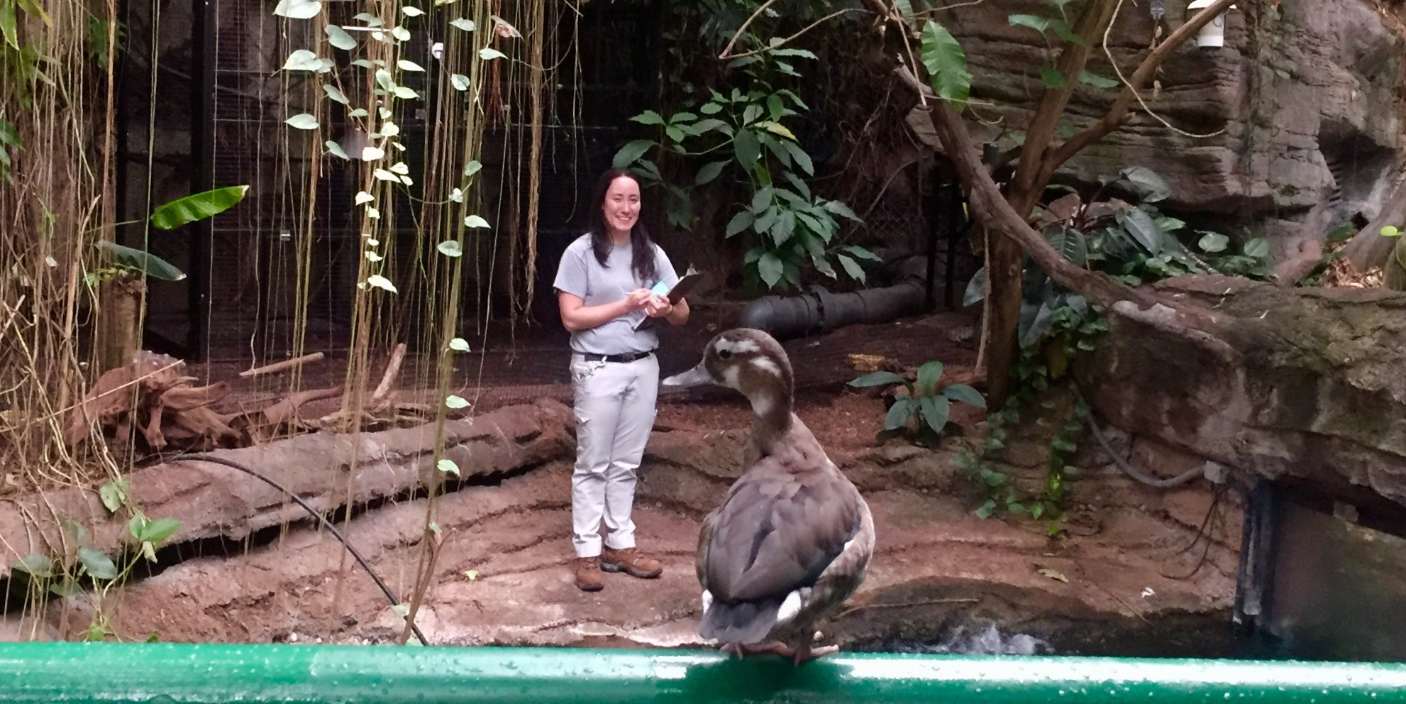 Amazonia keeper Hilary Colton recall trains the 13 free-flighted birds in the exhibit.