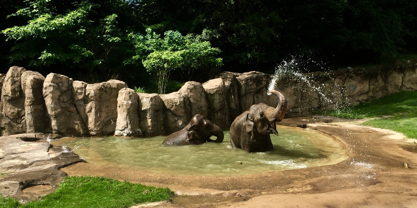 A Day In The Life Of An Elephant Keeper Smithsonian S