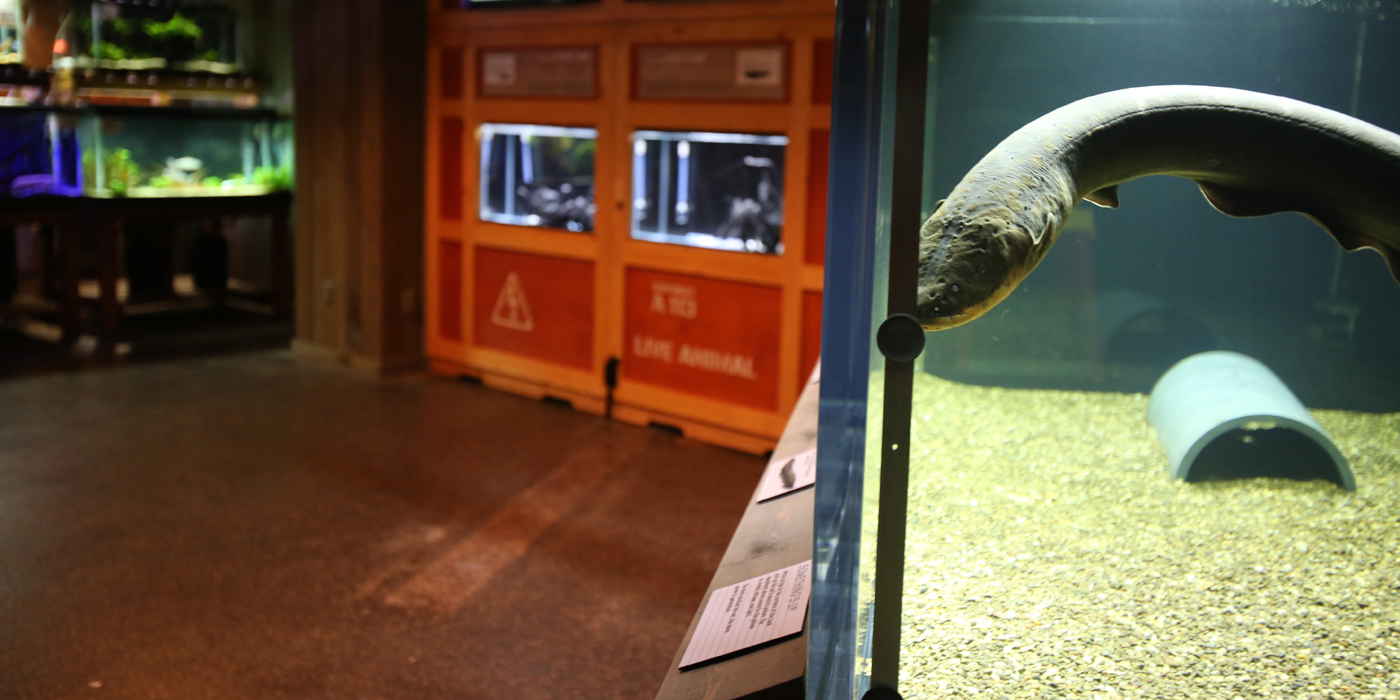 New Electric Fishes Exhibit Opens at Smithsonian\'s National Zoo ...