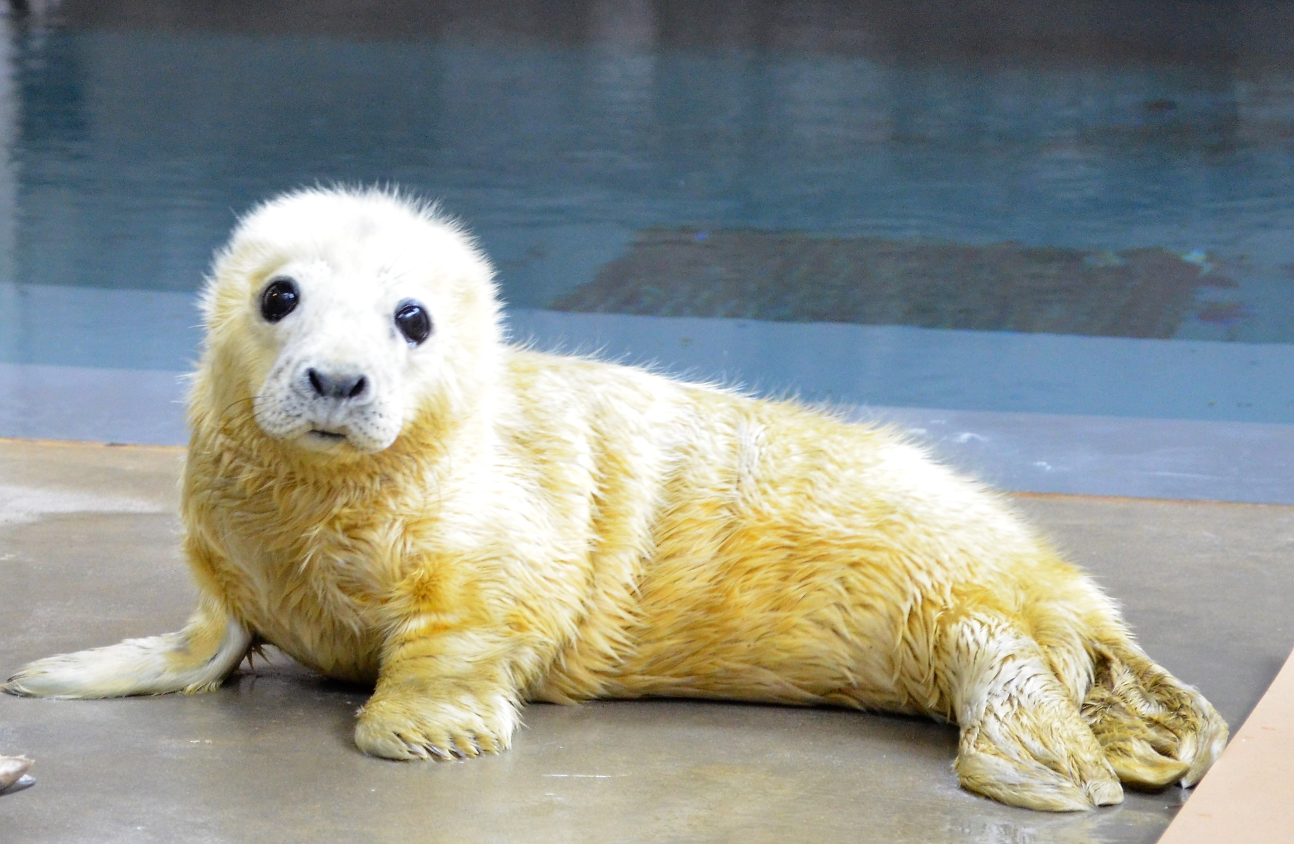 Smithsonians National Zoo Welcomes New Seal Pup to Gray Seal