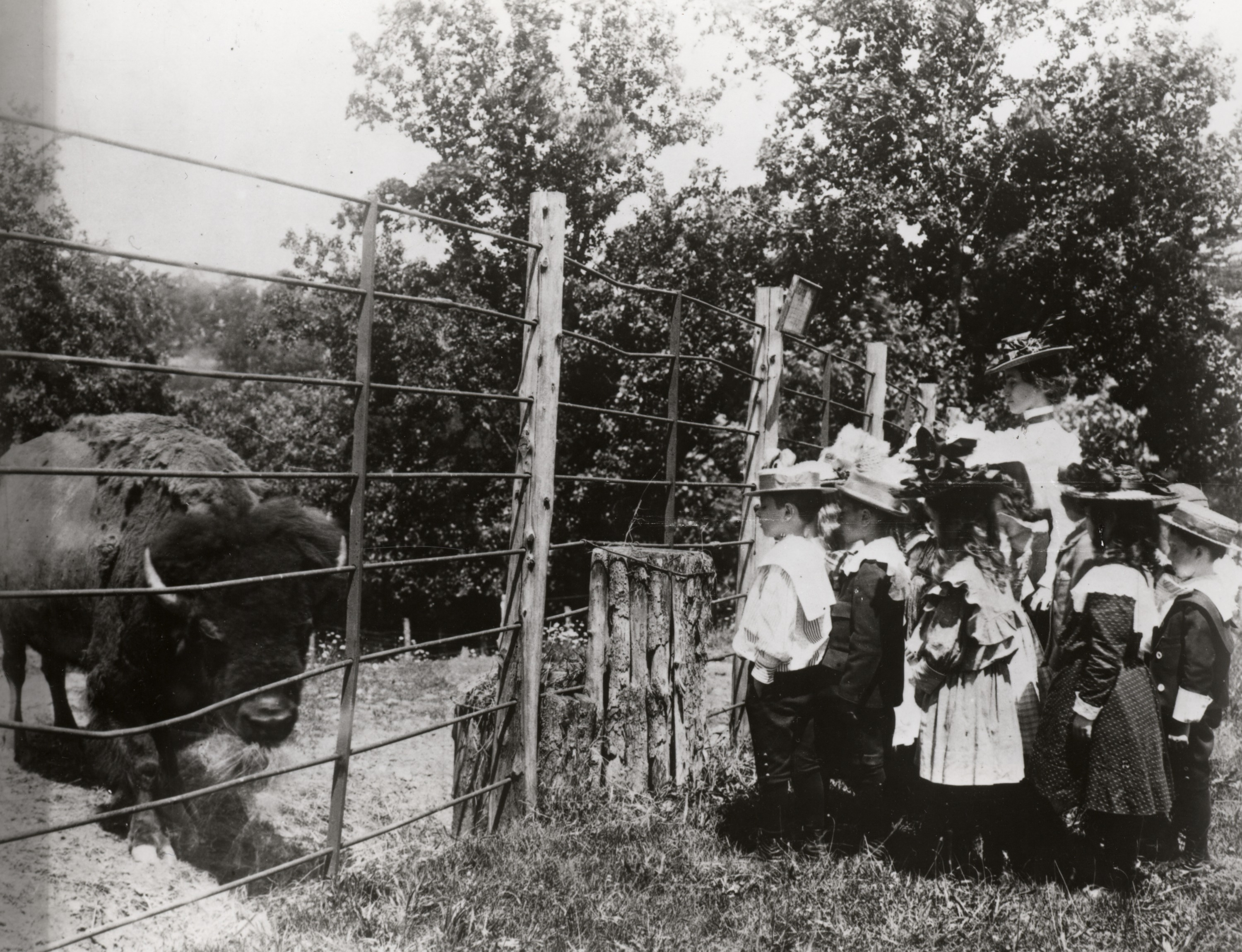 A black-and-white photo from 1899 of a group of schoolchildren looking at an American bison at the Smithsonian's National Zoo