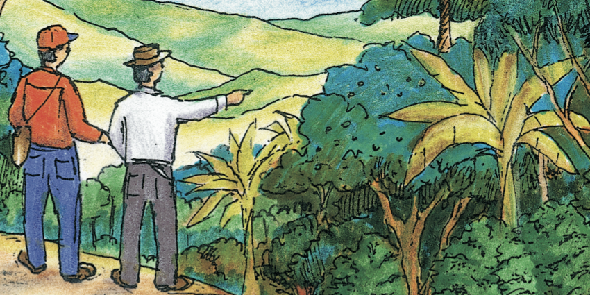 illustration of people looking at the canopy of trees over a coffee farm