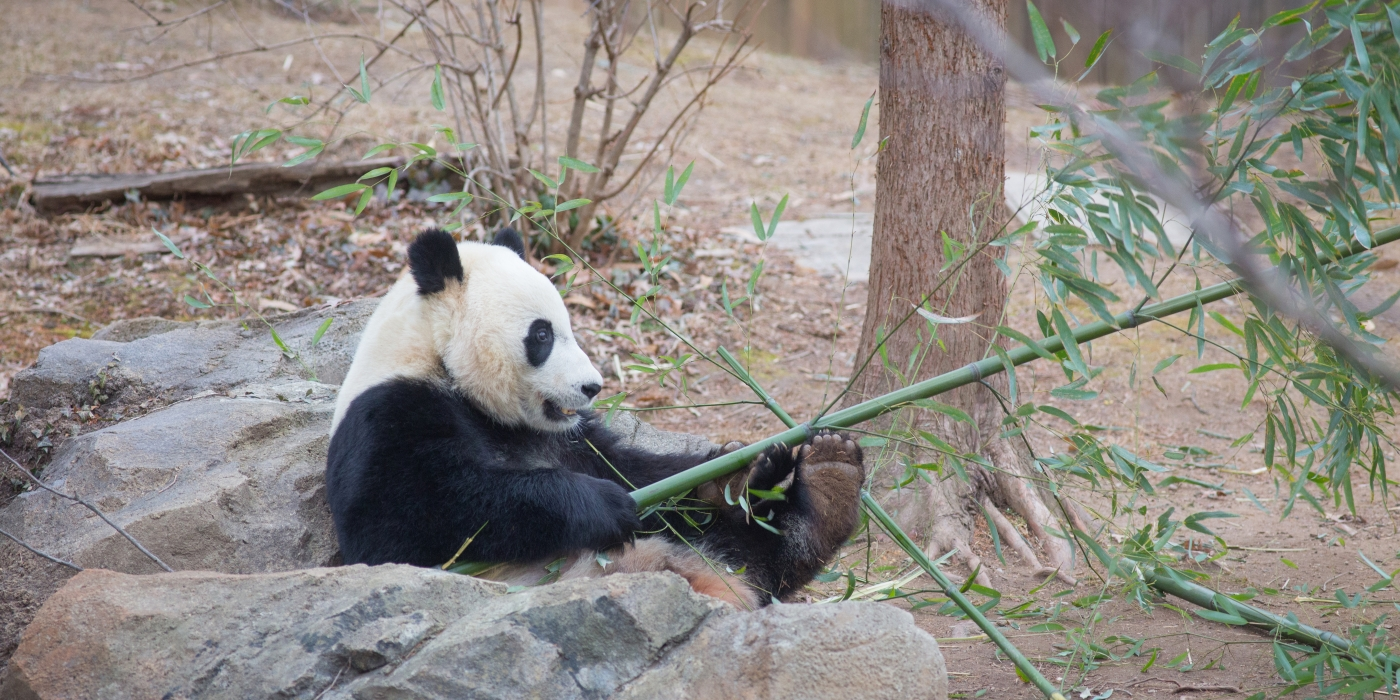 Bei Bei with Bamboo