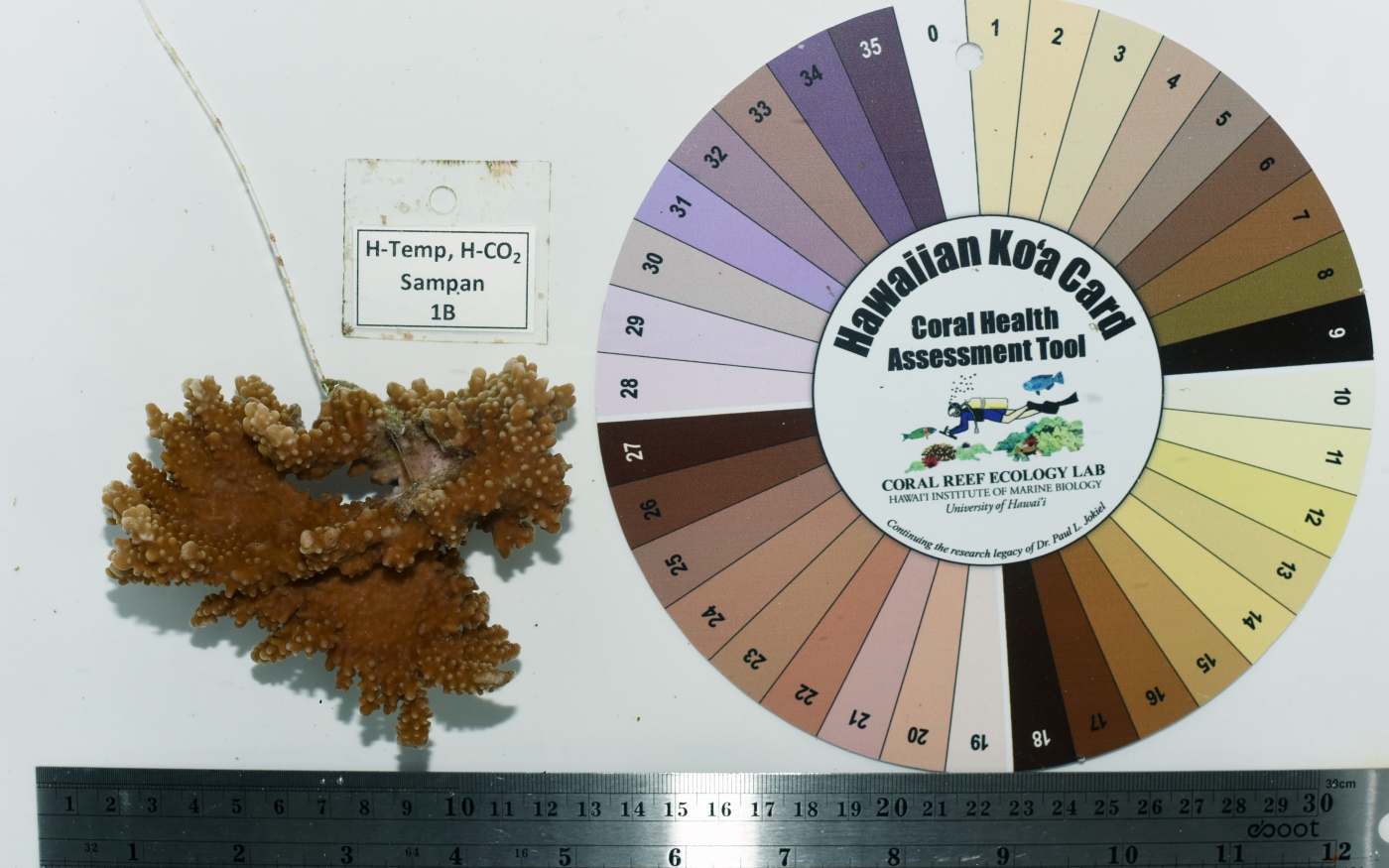 We use this color card wheel to determine if a coral is bleaching or not. What quadrant a coral falls under depends upon the species. Capitata colors (i.e. brown rice coral) are in the bottom-left quadrant.