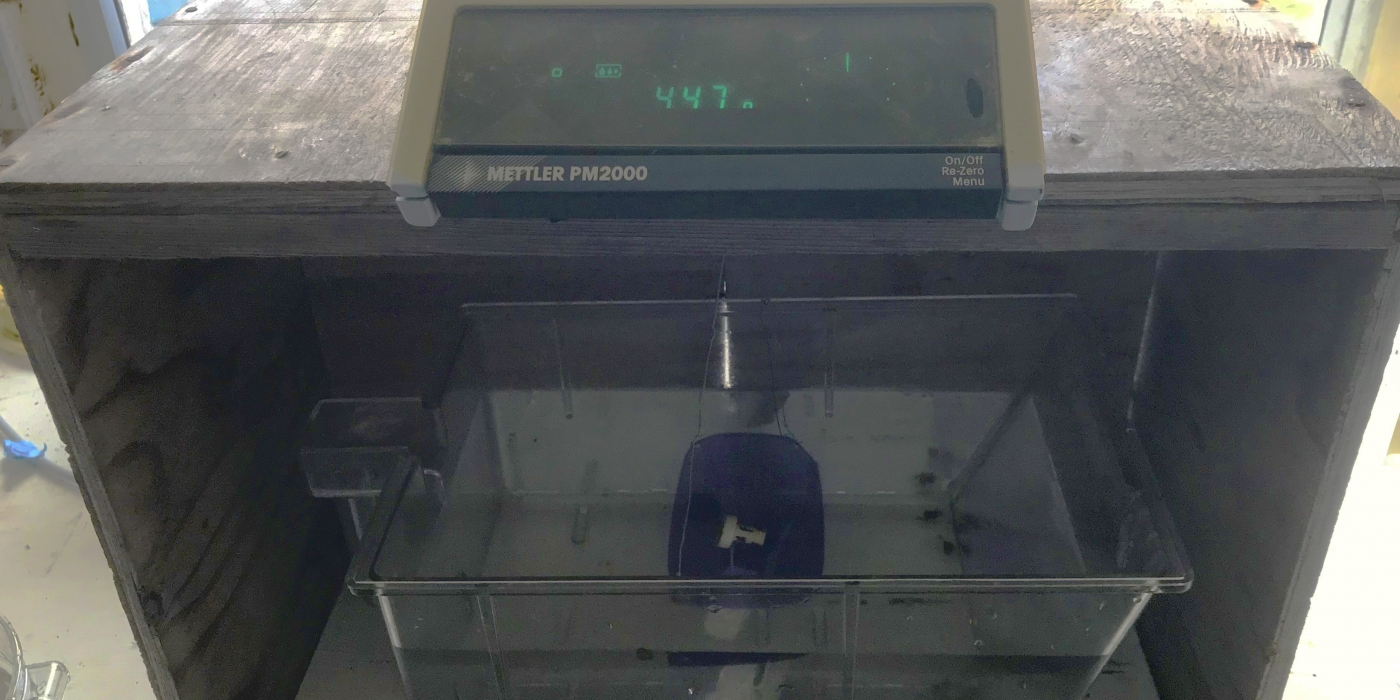 This scale measures the buoyant weight of the coral.