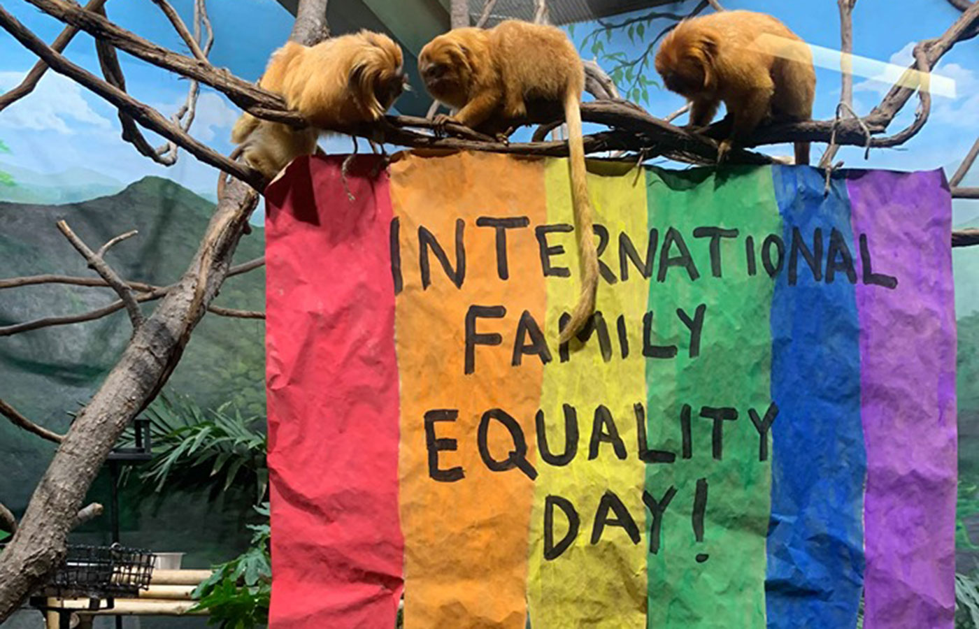 "Three golden lion tamarins perched on a tree branch above a rainbow sign that says ""International Family Equality Day!"""
