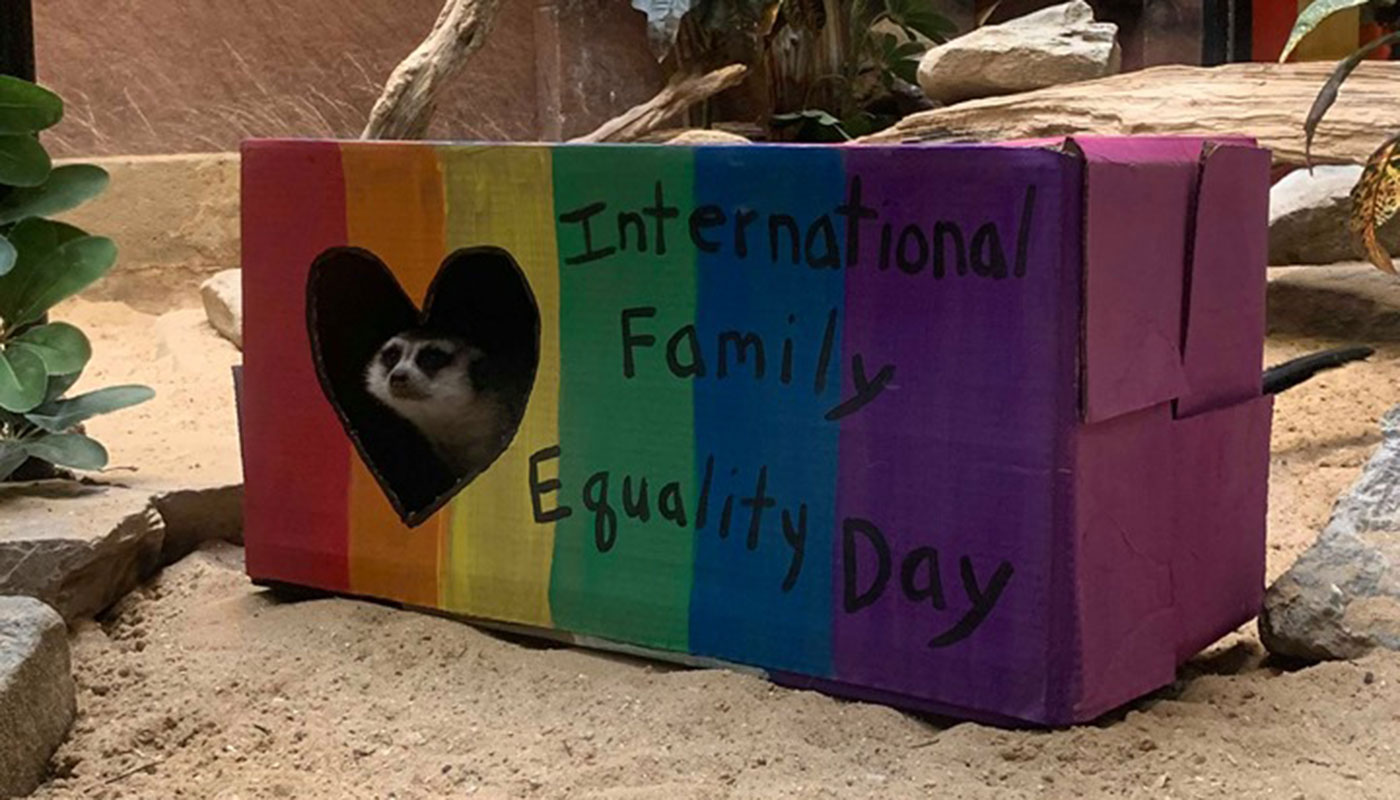 "A meerkat pokes its head out of a heart-shaped hole in a box painted in rainbow colors with the words ""International Family Equality Day"""