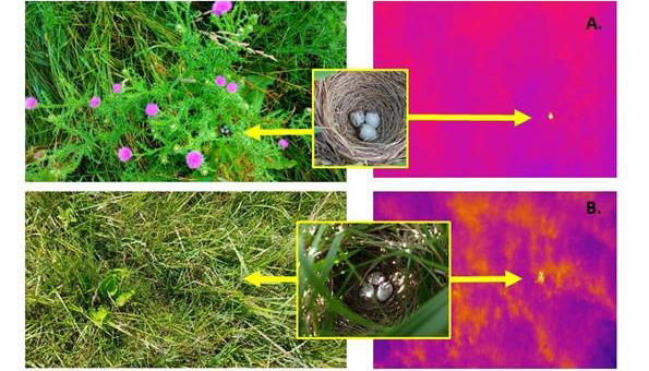 Thermal detection of bird nests