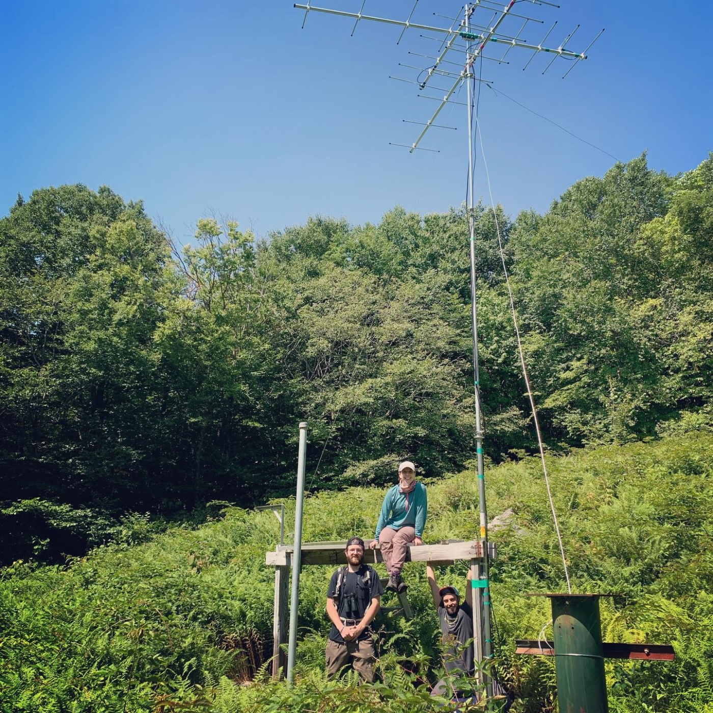 Field researchers sit below a radio tower in Hubbard Brook forest in New Hampshire. The tower will receive radio signals from birds fitted with radio transmitters