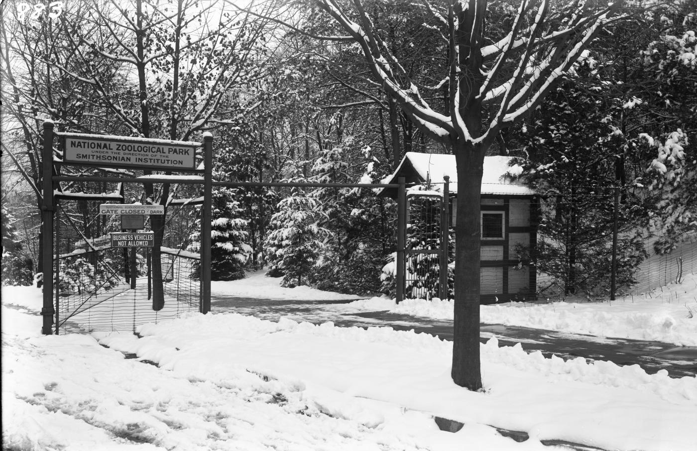 A black-and-white photo of the Adam's Mill Road entrance to the Smithsonian's National Zoo on a snowy day in 1910.